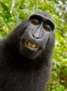 monkey-the-selfie_3000636k